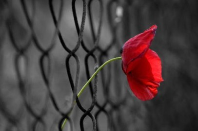 tulipam